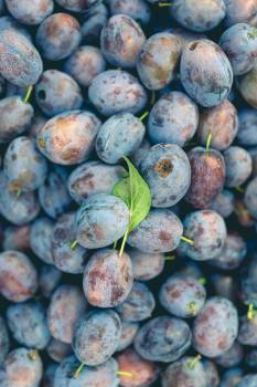 Blueberry Berry Edible fruit #362577