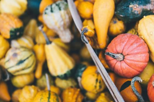 Vegetable Pumpkin Squash #362701