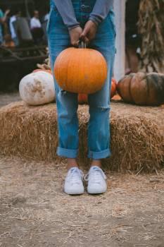Pumpkin Squash Hay #362995