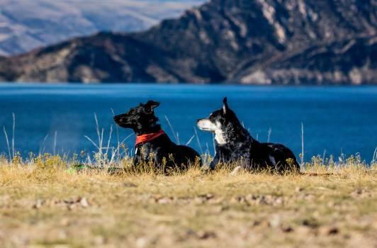Dog Shepherd dog Canine #363440
