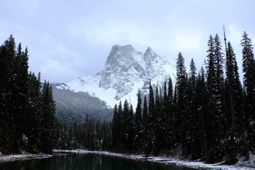 Mountain Snow Tree #363460