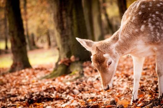 Mammal Wildlife Deer #363506