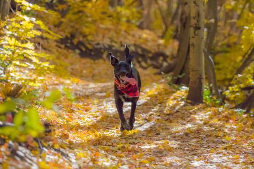Dog Canine Pet #363852
