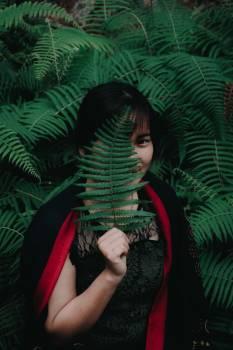 Comic book Tree Tropical Free Photo
