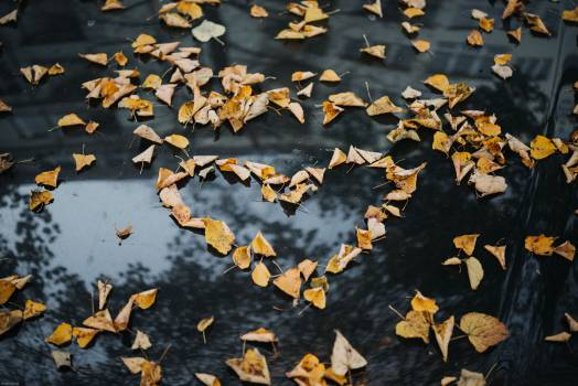 Cotton Texture Autumn #363887