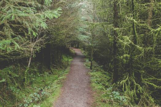 Tree Forest Landscape #364091