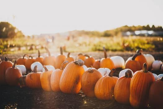 Pumpkin Vegetable Produce #364223