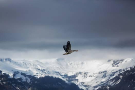 Bird Eagle Bald eagle Free Photo