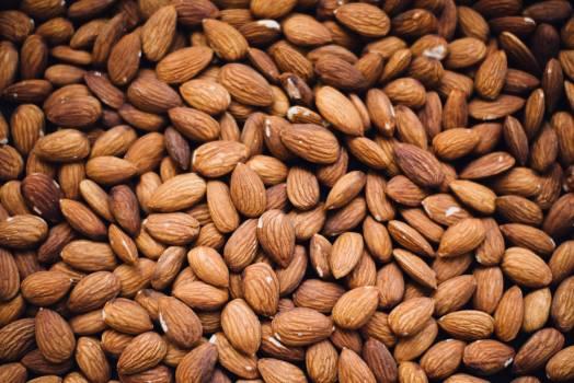 Seed Cacao Nut #364679
