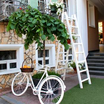 White Step Through Bicycle Leaning Beside Tree Plant Free Photo