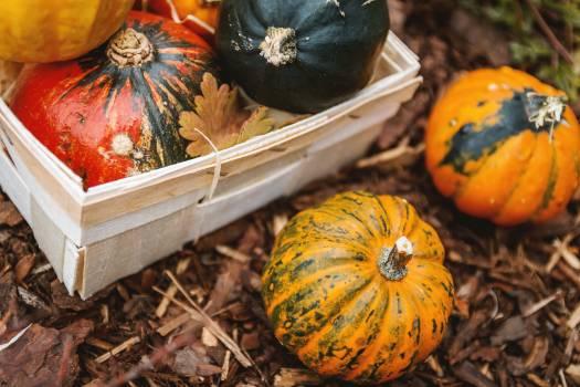 Pumpkin Squash Vegetable Free Photo
