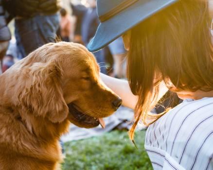 Retriever Sporting dog Dog #365067