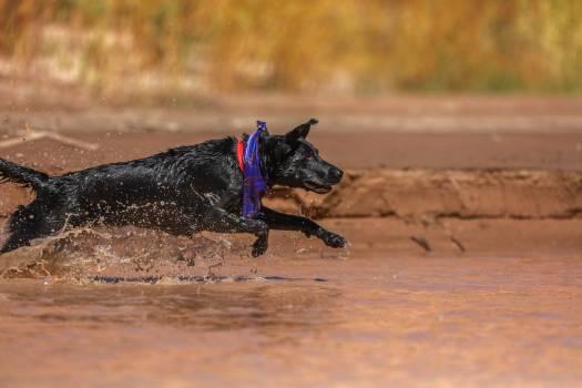 Dog Horse Pet #365219