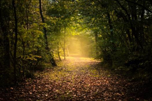 Tree Forest Autumn #365546
