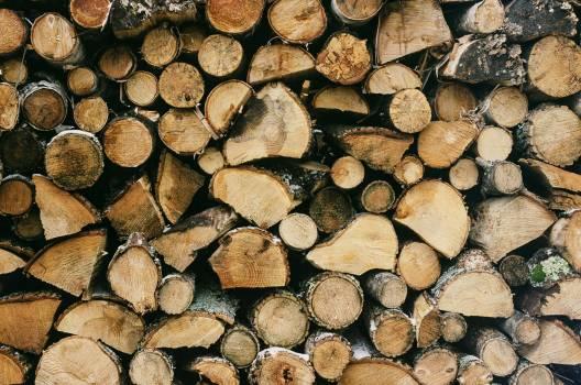 Bark Brown Texture #365790