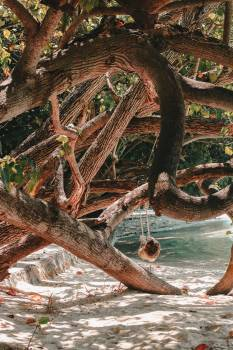 Tree Forest Snake #365826
