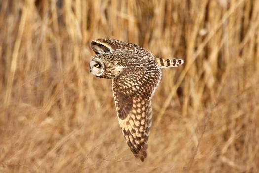 Owl Bird Predator #365920