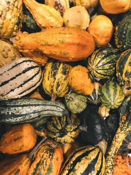Pumpkin Produce Squash #366057