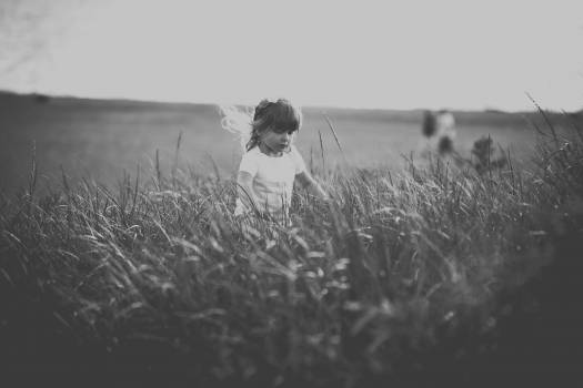 Field Wheat Amaranth Free Photo