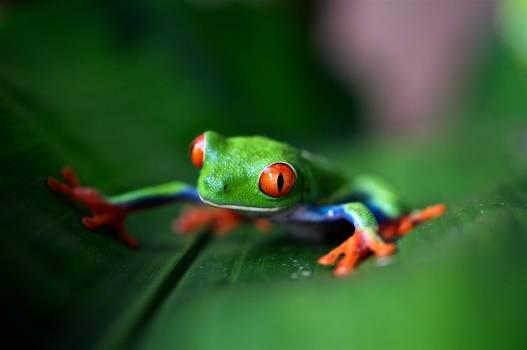 Tree frog Frog Amphibian #366321