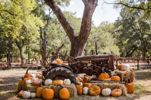 Pumpkin Squash Autumn Free Photo