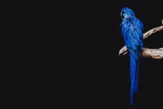 Coelenterate Invertebrate Animal Free Photo