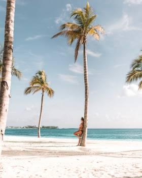 Coconut Beach Palm Free Photo