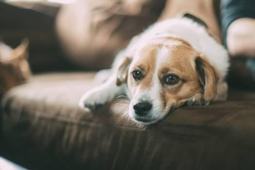 Dog pet animal lonely #36700