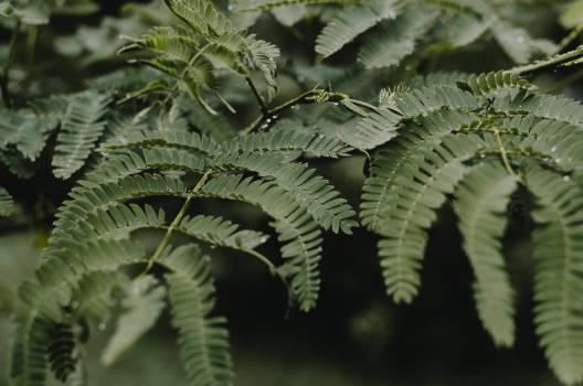 Tree Woody plant Fern #367158