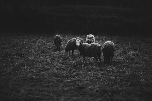 Simpleton Field Farm #367301