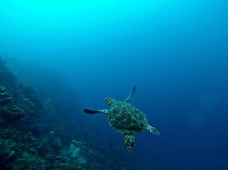 Sea Underwater Sea turtle #367364