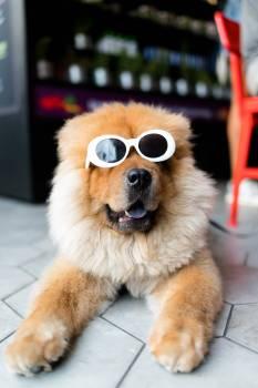 Dog Pet Fur #367555