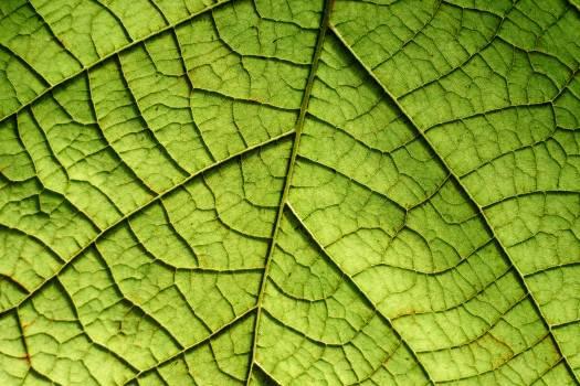 Greenery Texture Pattern #367593