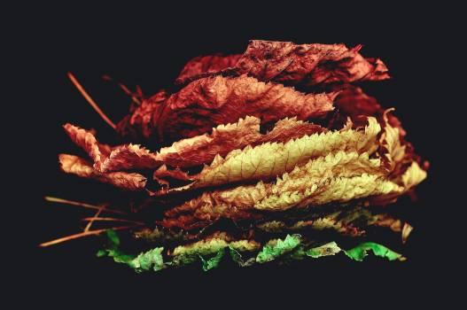 Brown Dry Leaves #36764