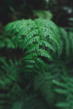 Fern Plant Forest #368167