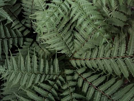 Fern Plant Forest #368186