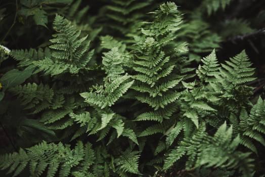 Fern Plant Forest Free Photo