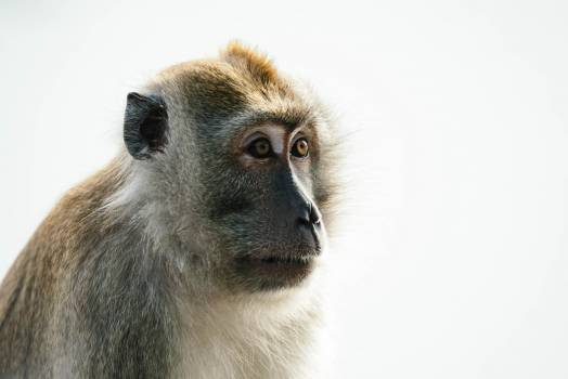 Macaque Monkey Primate #369426
