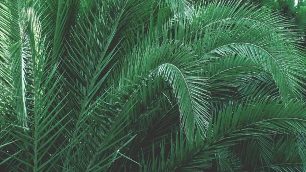 Green Plants #36951