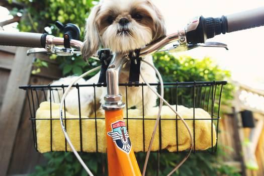 Toy dog Dog Canine #369630