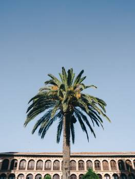 Coconut Tree Palm #369856