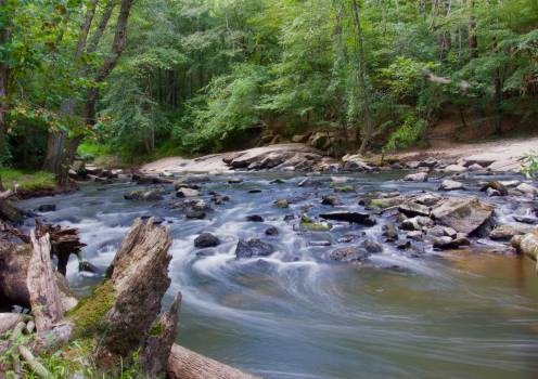 Stream in a Forest With Grey Rocks #37001