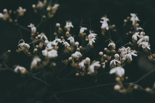 Vascular plant Plant Herb #370277