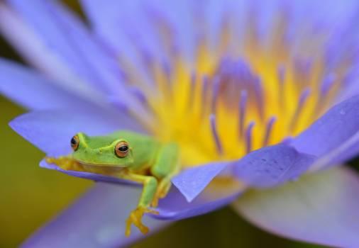 Tree frog Frog Amphibian #370551