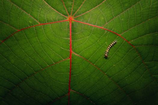 Sumac Woody plant Plant #370833