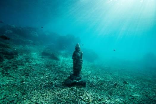 Underwater Sea Coral Free Photo