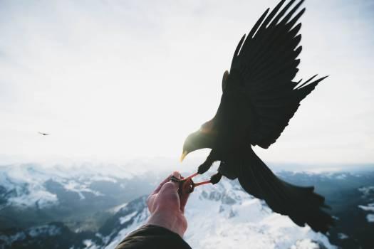 Hunter Sky Bird Free Photo