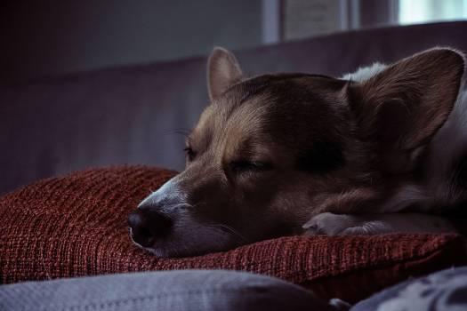 Dog Canine Domestic animal #372077