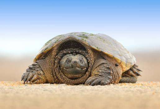 Box turtle Turtle Reptile Free Photo