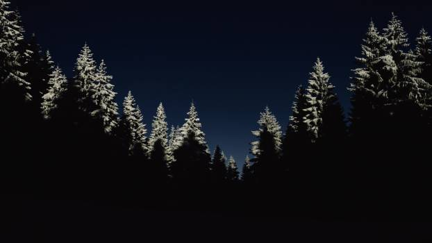 Pine Trees Covered by Snow during Night Time #37224